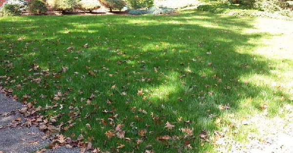 Lawn, Turf, and Grass: How-to-renovate-a-lawn