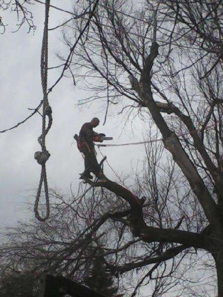Landscape Maintenance: Elm-Tree-Removal-Minot-North-Dakota
