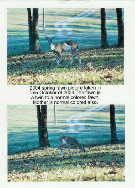 Just For Fun Off Topic: Deer-4-Legged