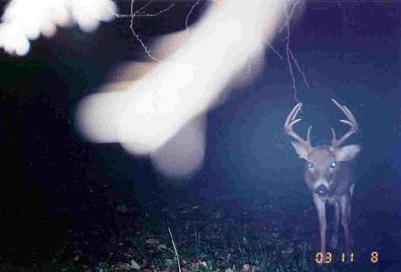 trail cam photo 2003 ( never seen him in the 2004 season, he would of been a shooter )