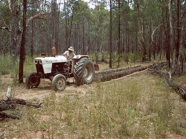 David Brown tractor snigging logs out of the forest